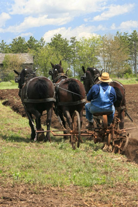 Amish Working